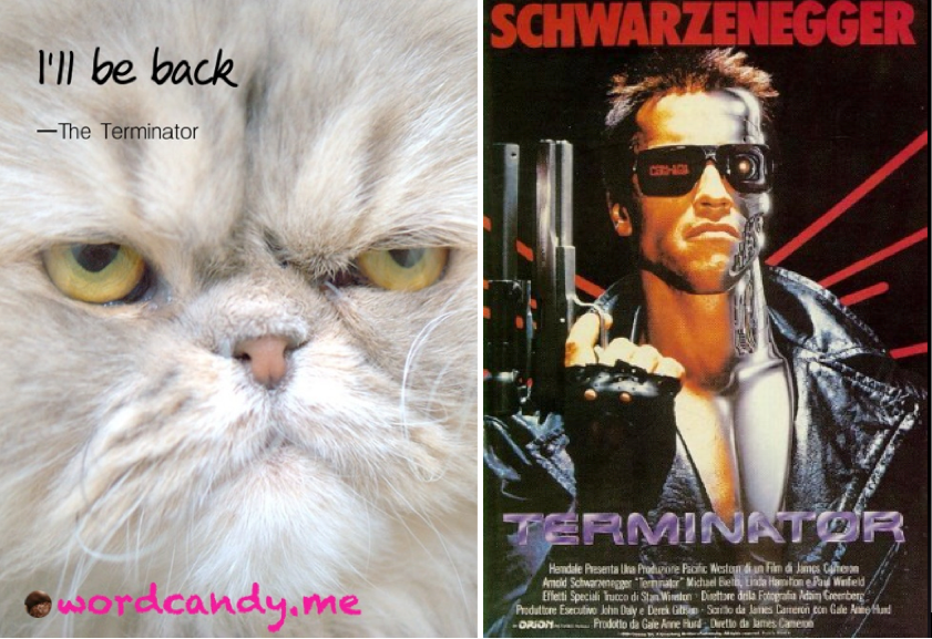 Celebrity Humor Arnold Terminator and Funny Cat pictures