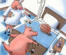 Vegetarian humor food humor eating humor