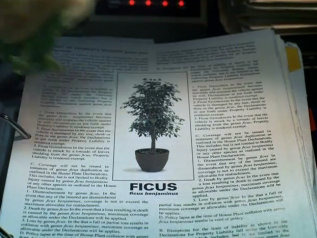 Insurance Humor Ficus Video